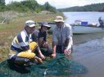Seine netting in the East Kleinemonde Estuary