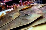 Larger specimens such as these rays require especially large holding tanks