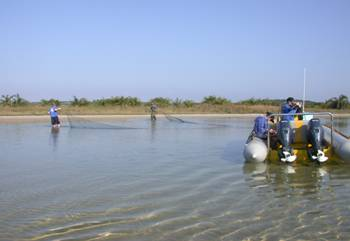 Fish sampling in Kosi Estuary
