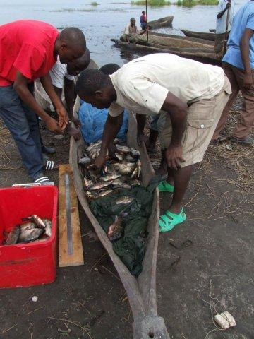 Conducting research on fish catches, Lake Liambezi, Namibia