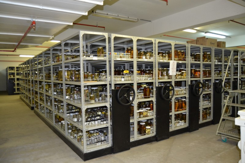 Mobile shelving in the SAIAB Collection Facility