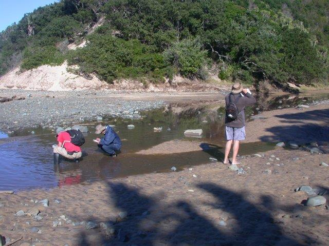 Scientists collecting information from an Eastern Cape micro-estuary