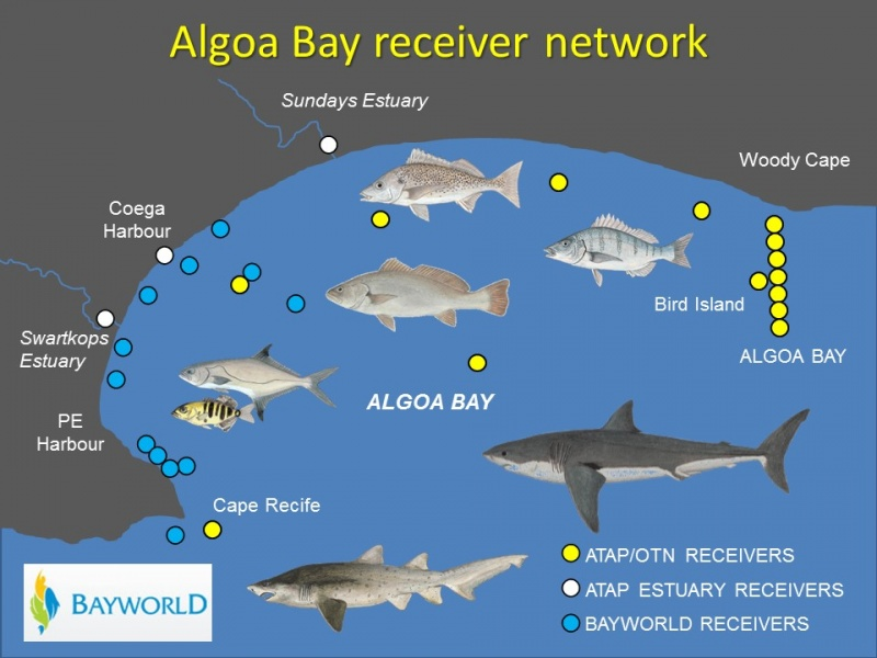 Algoa Bay Array June 2016