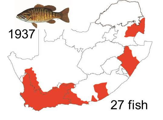 Smallmouth bass introduced 1937