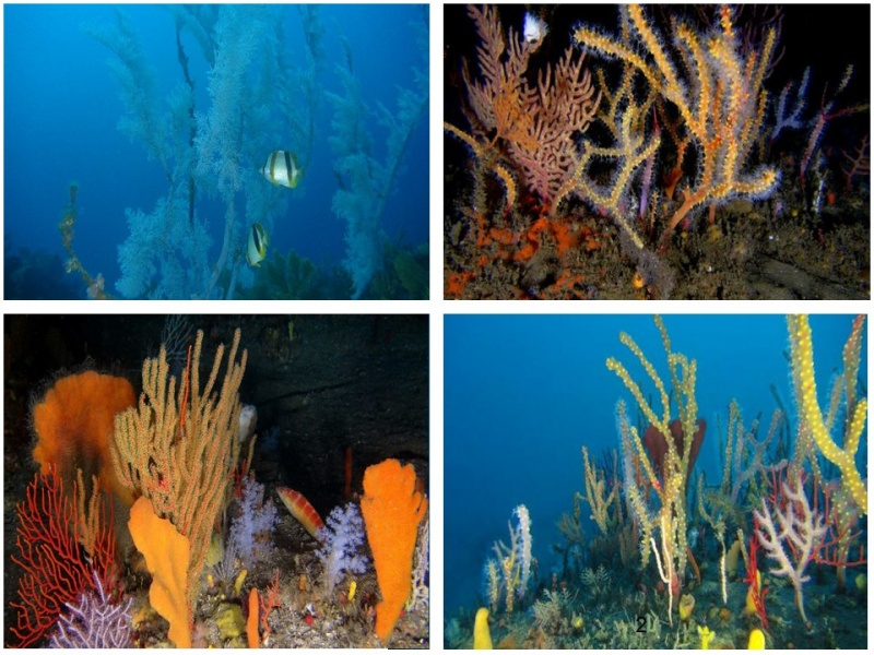 Mesophotic (>30m) reef habitats off the east coast of South Africa